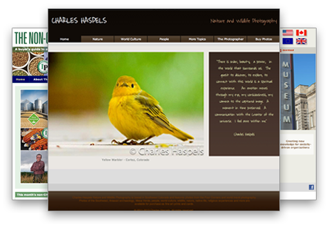 Custom artist porfolio web-site design